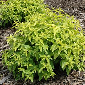 Plant Photo 3