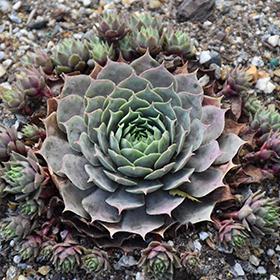 Succulent and Cactus Photo